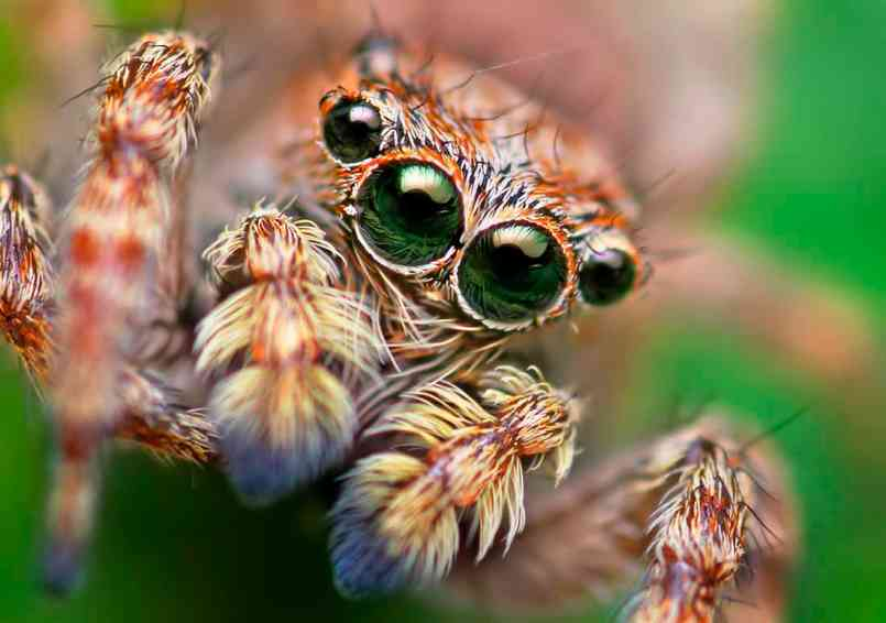 what do we know about the minds of spiders animal cognition
