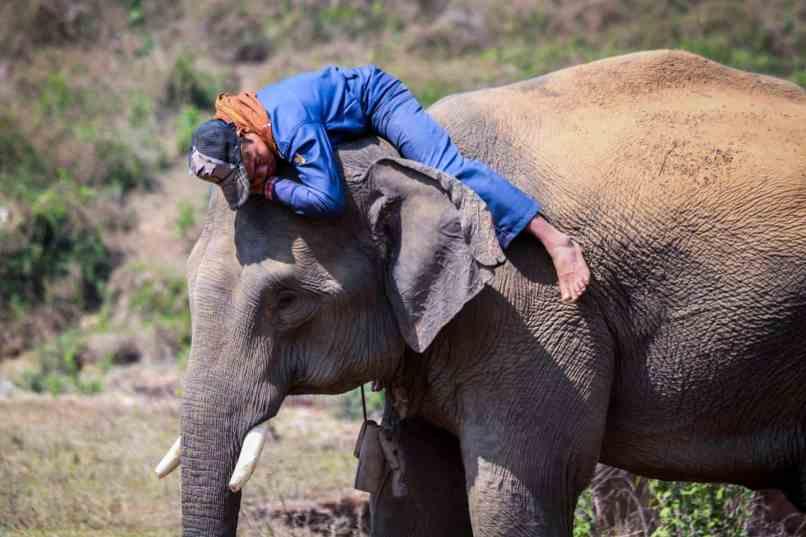 elephantmahout