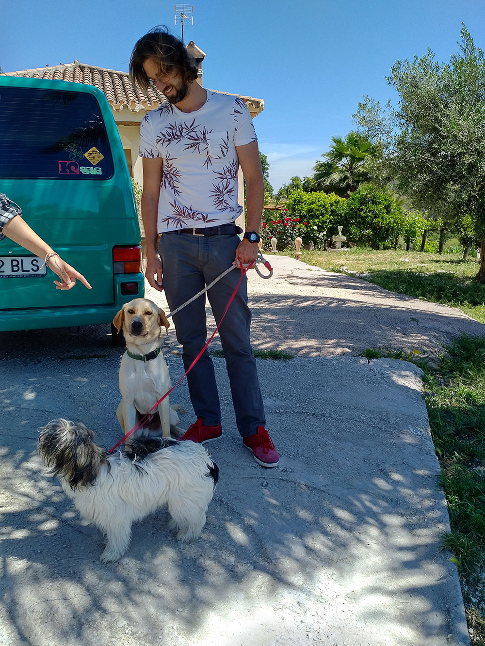 Five dogs from Spain — Finally, partial success!