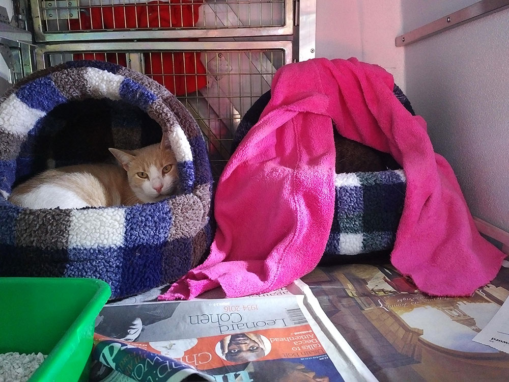 Much more forward than Tiggs, who's hiding under a fine pink blanket