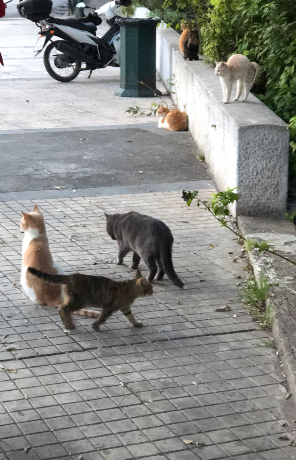 …and chat to a few street cats