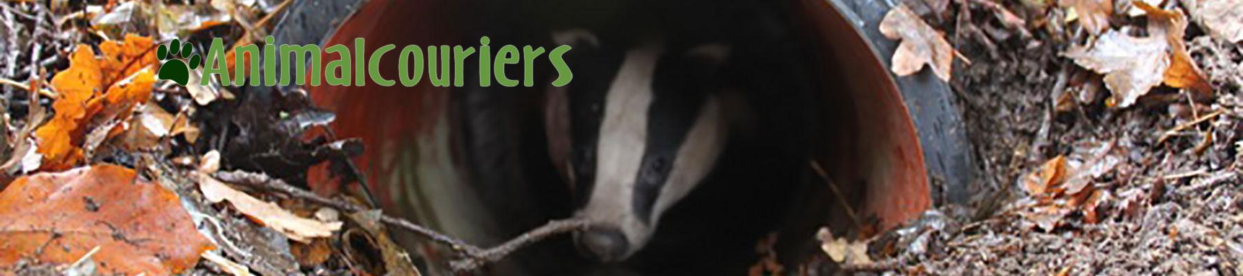 Badger release