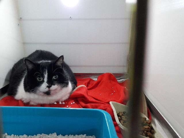 Adorable tuxedo cat Mini, who belongs to Rachel, is on her way from Alvor to Lancashire