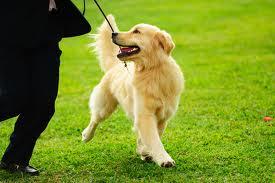 Indianapolis dog training