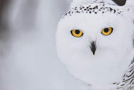 Fall Owl Desktop Wallpaper El Gran B 250 Ho De Las Nieves Animales En Video