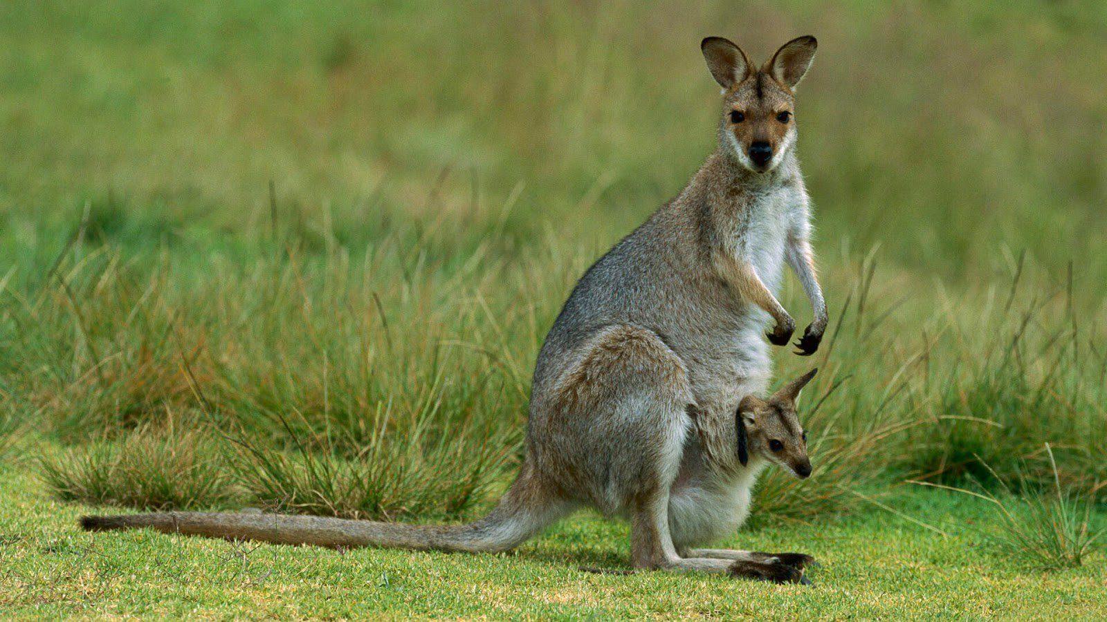 Can S Animales En Peligro De Extincion Imagenes Y Fotos