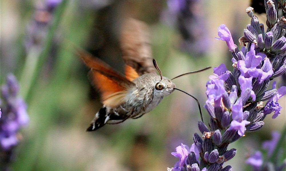 Los insectos ms raros del mundo