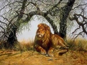 EL leon, tambien conocido como el Rey de la Selva