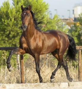 caballo al trote