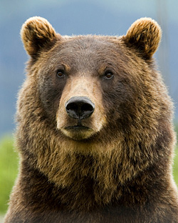 https://i0.wp.com/www.animalfactguide.com/wp-content/uploads/2013/01/grizzly1.jpg