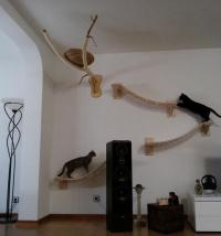 Man transforms room into feline obstacle course  Animal ...