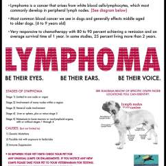 Dog Lymph Nodes Diagram Ritetemp 8022 Thermostat Wiring What You Should Know About Canine Lymphoma  Animal Health