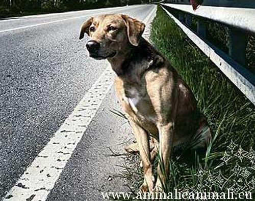abbandono_cani