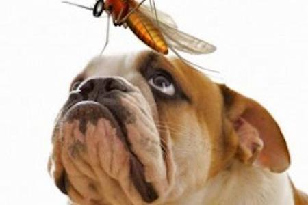 come-proteggere-il-cane-dalle-zanzare_47f295b77b6c7216c517dc2dc8718b90