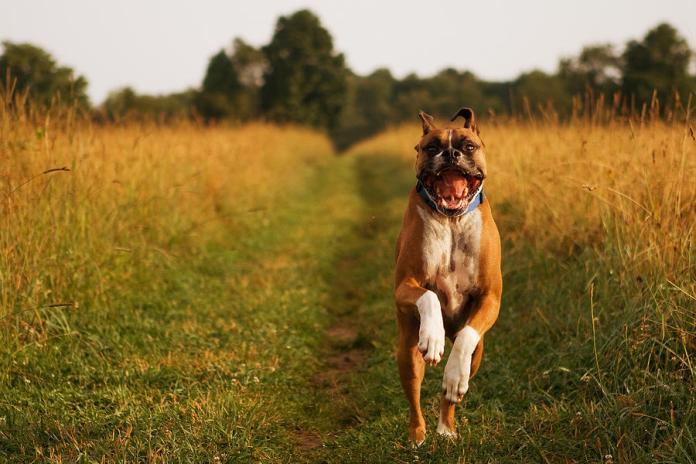 scegliere crocchette per cani migliori