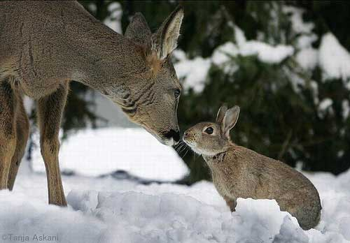 Image result for rabbit and deer
