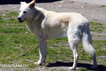 Photo Gallery Archive  Animalisanich