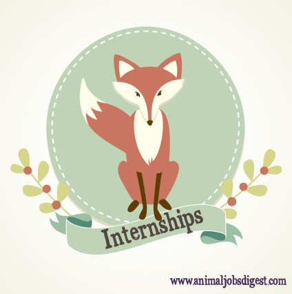 Fox image - animal lover internships
