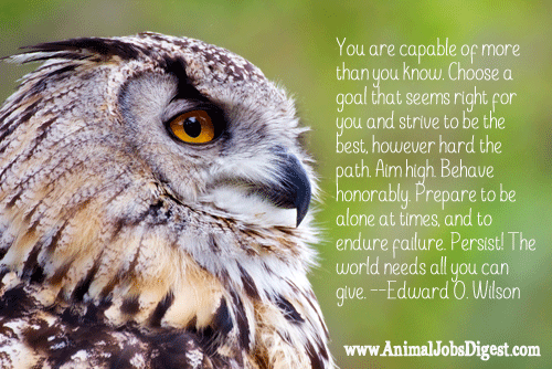 Owl with EO Wilson quote