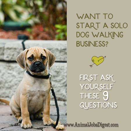 Want to Start a Solo Dog Walking Business? First Ask Yourself These