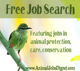 Free Job Search Banner - Hummingbird