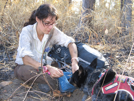 Conservation Canine Handler Jennifer Hartman with CK9 Max