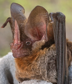 Bat held in a glove