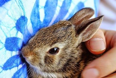 5 accessori per conigli indispensabili per accoglierli in