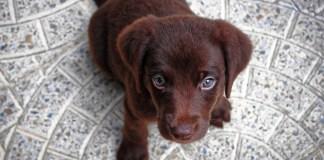 cucciolo solo in casa