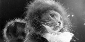 cat with hat: gatti famosi