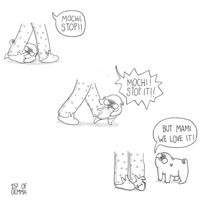 cane morde pantofole