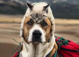 animali insieme