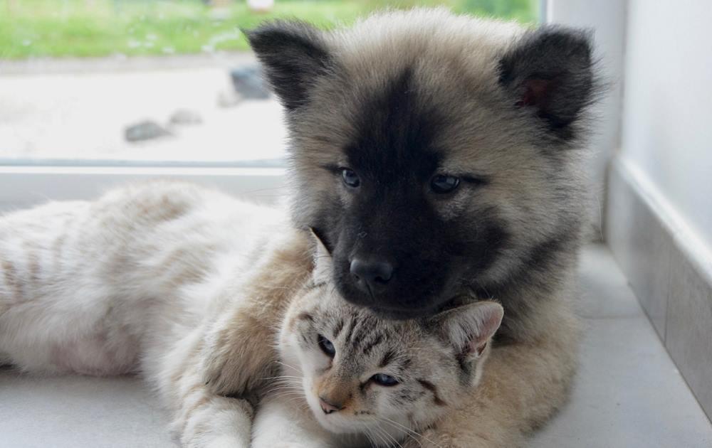 cane e gatto: antiparassitari per cani e gatti