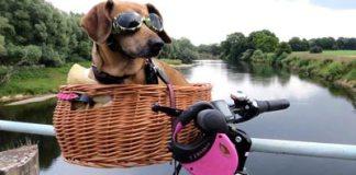 vacanze con il cane: cane in bici