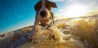 Viaggiare con il cane: cane al mare