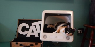 Apericena con i gatti