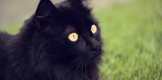 Giornata Mondiale del Gatto Nero 2018.