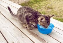 idratazione dei gatti