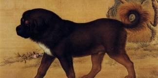 Antico ritratto di mastino tibetano