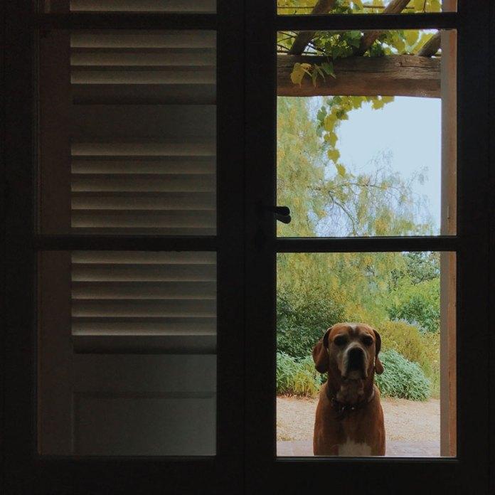 Cane fuori dalla porta