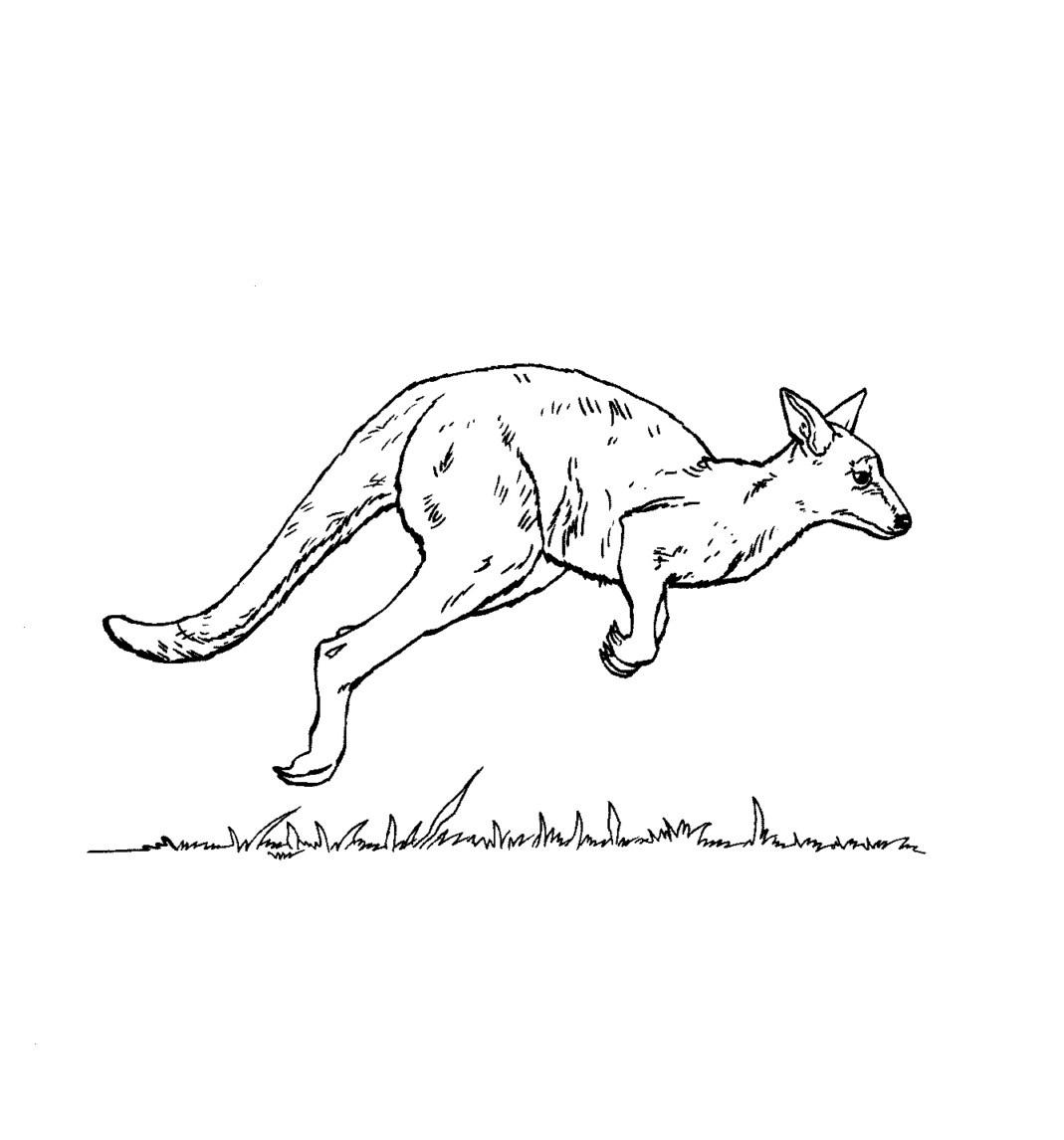 Free Printable Kangaroo Coloring Pages For Kids