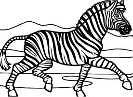 Zebra Coloring Pages   Kidsuki