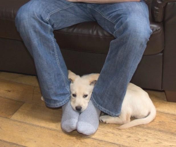 συμπεριφορά Σκύλος πόδια