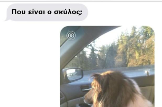 φοιτητής Σκύλος πανεπιστήμιο