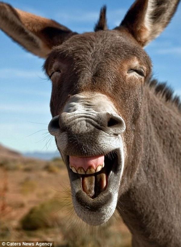 σέλφι ζώα γκριμάτσες selfie