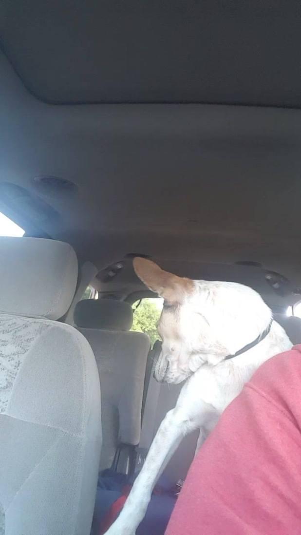 Σκύλος σκύλοι Σκυλίτσα που βρέθηκε να κλαίει στην άκρη ενός δρόμου φιλάει αμέσως την γυναίκα που την διέσωσε σκυλίτσα