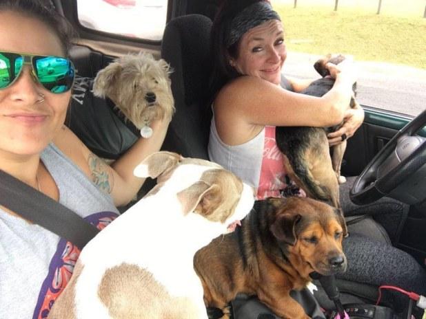 υιοθεσία σκύλων σκυλιά Κόστα Ρίκα