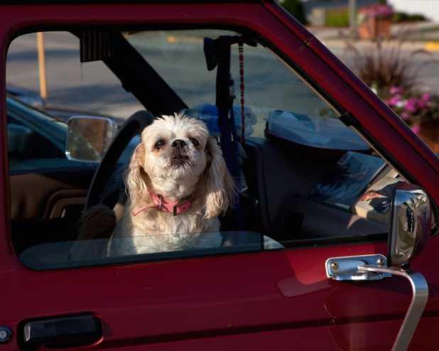 Σκύλος σκύλοι πράγματα που δεν πρέπει να κάνετε ποτέ στον σκύλο σας 10 πράγματα που δεν πρέπει να κάνετε ποτέ στον σκύλο σας