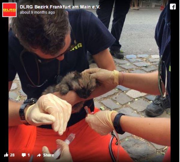 Σκύλος σκύλοι κουτάβια κουτάβι Η Αστυνομία έκανε έλεγχο σε ένα ζευγάρι που πουλούσε κουτάβια στον δρόμο. Αυτό που ανακάλυψε; Θα σας εξοργίσει!