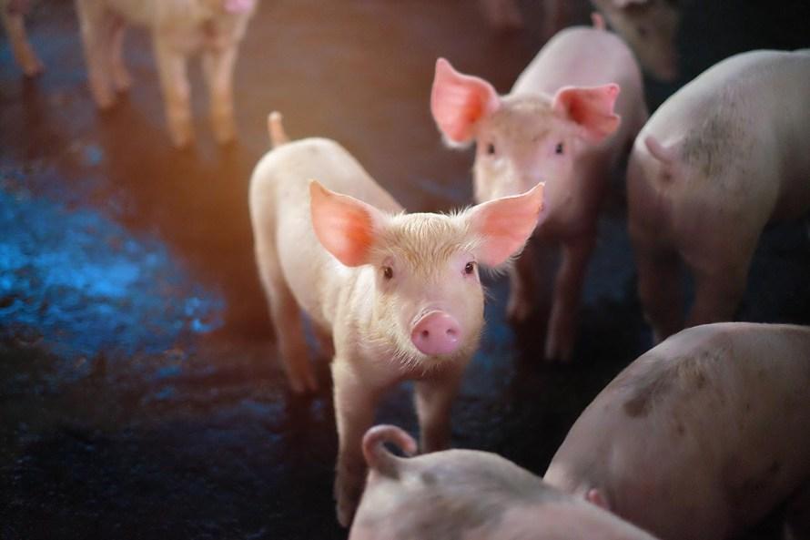 Nation Farm Animal Care Council